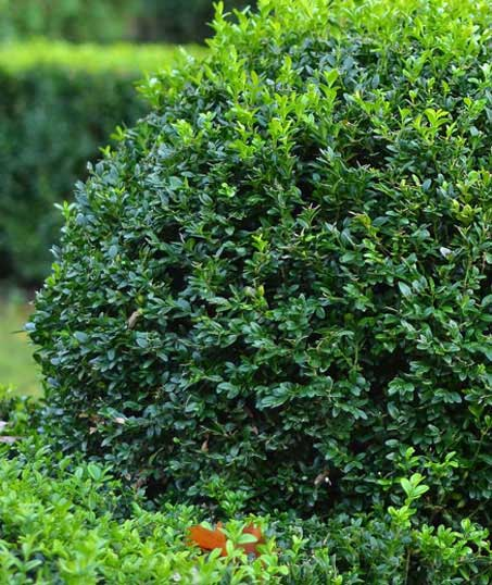 TTK Custom Services LLC Shrubs & Hedges