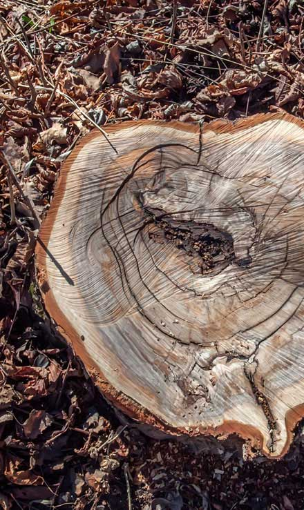 TTK Custom Services LLC Tree Removal