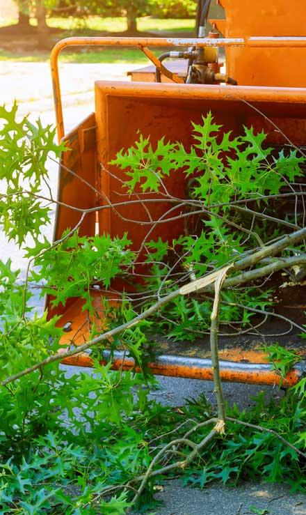 TTK Custom Services LLC Tree Trimming