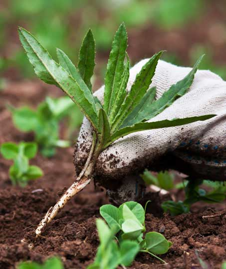 TTK Custom Services LLC Weed Control services